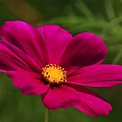 COSMOS - NATURAL BACKGROUND by Lori Deiter