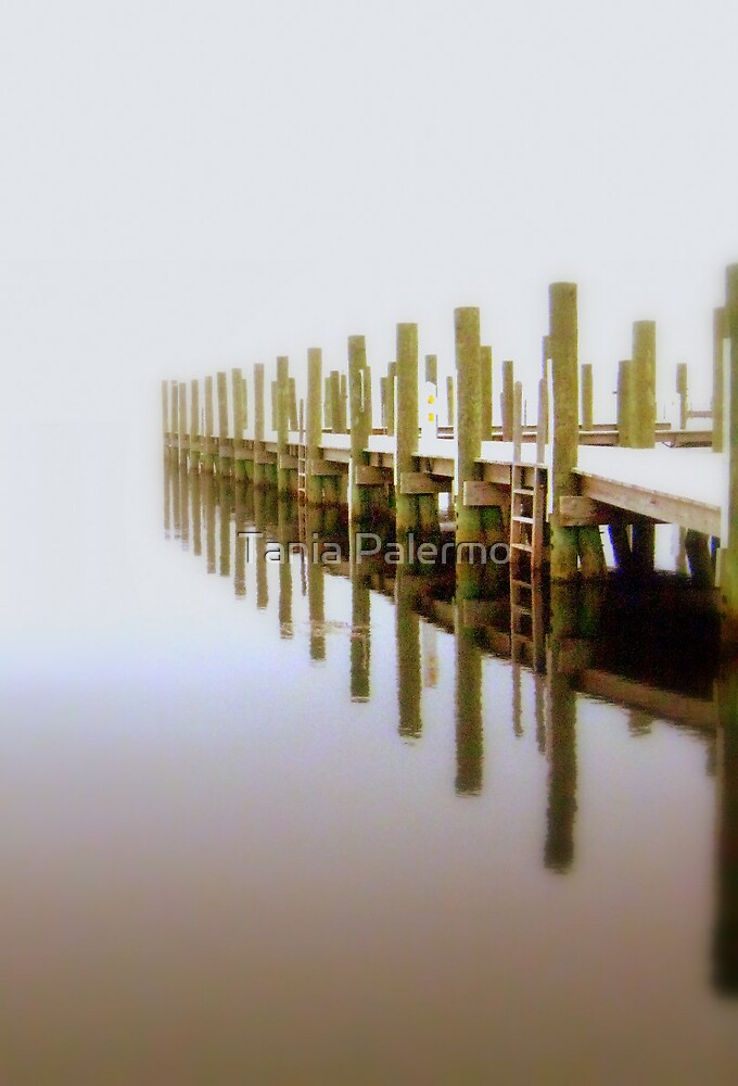 infinity by Tania Palermo