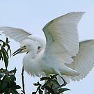White Wings by Bonnie T.  Barry