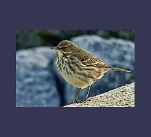 Rock Pipit At Lyme Regis Harbour by lynn carter