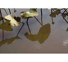 Pad Reflections Photographic Print