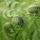 Uncurling Ferns by ElyseFradkin