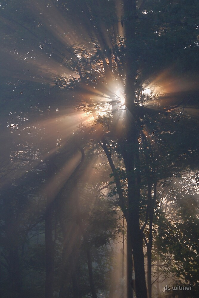 let there be light by dc witmer