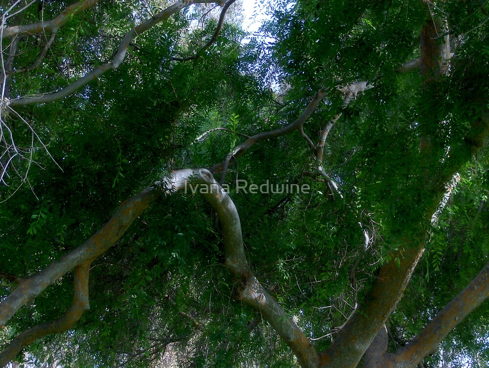 Study in Light and Shadow: Lush Foliage and Tangled Branches by Ivana Redwine