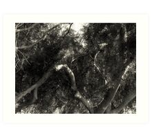 Study in Light and Shadow: Lush Foliage and Tangled Branches in Black and White #1 Art Print