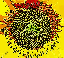 Sunflower by Sarah Niebank