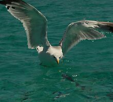 the seagull and the fish by squinternett