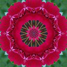 Geranium Kaleidoscope by Erica Long