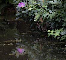 Rhodie Reflection by Sue Morgan