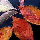 Leaves on Water by Rachael Evans