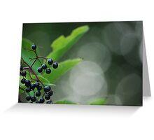Elderberry Greeting Card