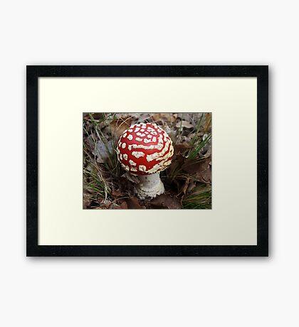 Fabulous Fungi Framed Print