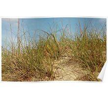 Carolina Dune Poster