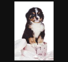 Bern Shepherd puppy in a box Kids Clothes
