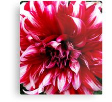 I AM NOT RED ENOUGH Metal Print