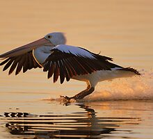 """ Sunset landing  Marlo Australia "" by helmutk"