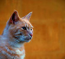 Ginger Cat Moen Denmark by tamanna
