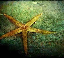 Starfish by Trish Woodford