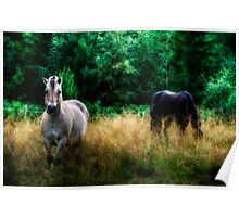 Fjord Horses Poster