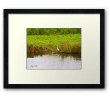 Gator & Birds Framed Print