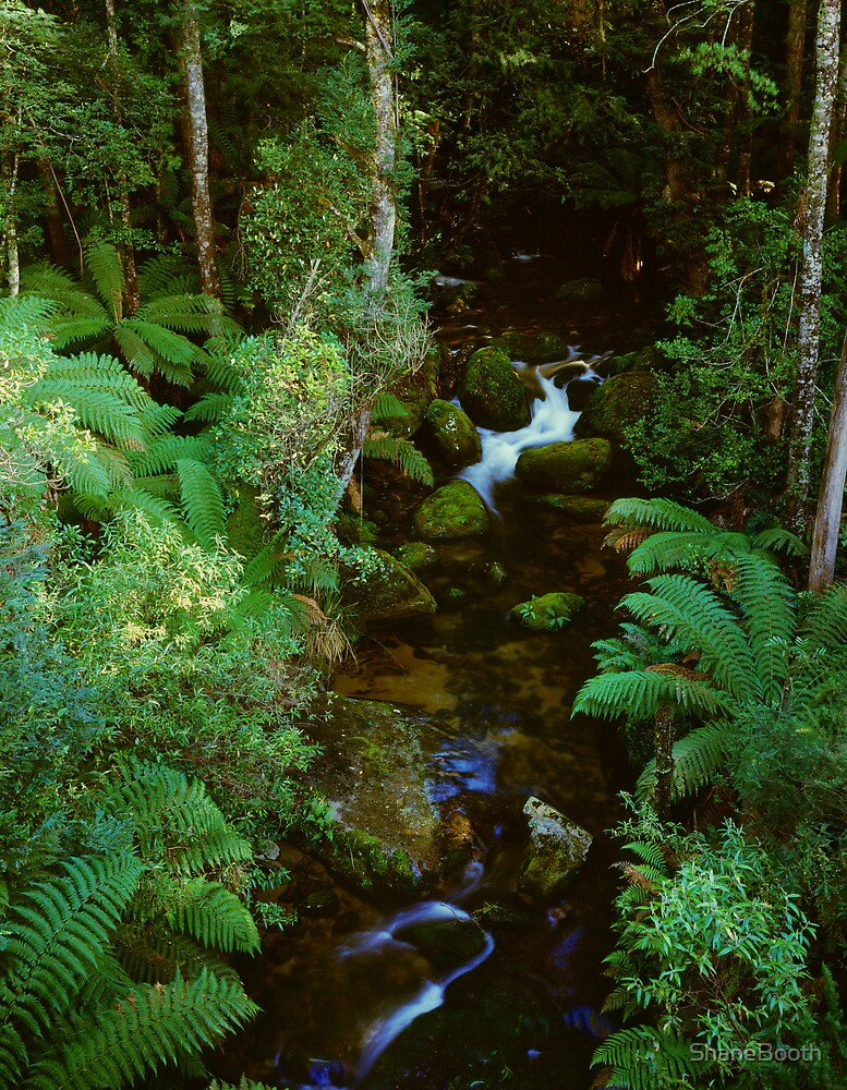 Christmas Creek - Mt Baw Baw by ShaneBooth