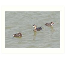 Momma And Her Two Baby Pied-billed Grebes. Art Print