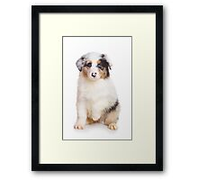 Cute Puppy Australian Shepherd Framed Print
