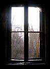 Window  by Mojca Savicki