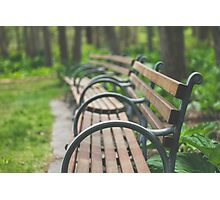 Garden Benches Photographic Print