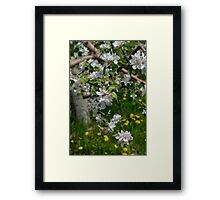 Wellwood's Spring Apple Blossoms Framed Print