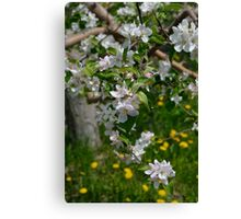 Wellwood's Spring Apple Blossoms Canvas Print