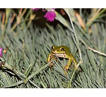 Froggie Blurr Photographic Print