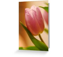 Gentle Tulip  Greeting Card