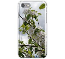 Wellwood's Spring Apple Blossoms - 2 iPhone Case/Skin