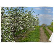 Wellwood's Spring Apple Blossoms - 4 Poster