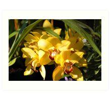 Yellow Orchid Flower Art Print