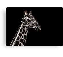 Giraffe Portrait Fine Art Print Canvas Print