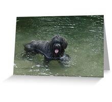 Bouvier Greeting Card