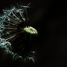 Dandelion by Mudgers