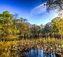 The Bulrush Pond by DavidHornchurch