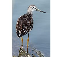 Greater Yellowlegs Looking Over Shoulder Photographic Print