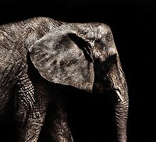 Elephant Portrait Fine Art Print by stockfineart