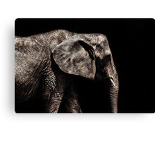 Elephant Portrait Fine Art Print Canvas Print