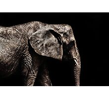 Elephant Portrait Fine Art Print Photographic Print