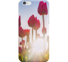 Pink Tulips at Sunset iPhone Case/Skin