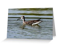Greater Yellowlegs With Fish (Frame 2) Greeting Card