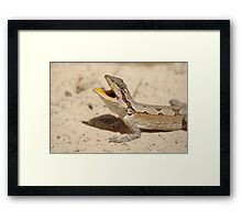 Mallee Dragon Framed Print