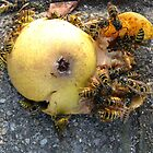Wasp Party by Detlef Becher