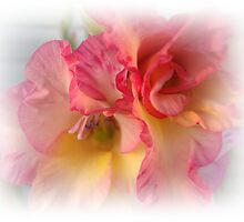 Gladiola - Up Close by Sherry Seely