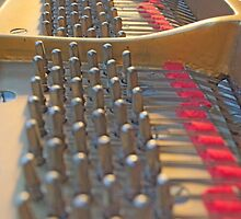 Piano Pegs by Timothy  Ruf